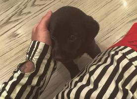 Meet Phil! Justin Bieber Introduces New Adorable Puppy