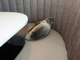 Saturday Smiles: Baby Sea Lion Drops into Restaurant; Lady Gaga to Perform Tribute; What the Stars Will Eat at the Oscars