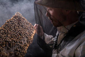 european honeybee virus spreading globally due to humans, study finds