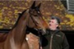 paul nicholls has never known a season like it as his...