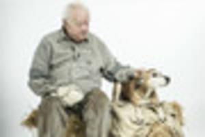 of mice and men producers search for elderly dog to appear in...