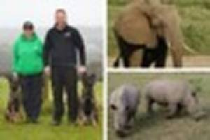 carmarthenshire dog centre joins fight against poachers in africa