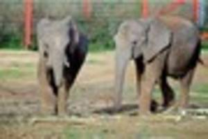 elephants have a really n-ice time as temperatures plummet
