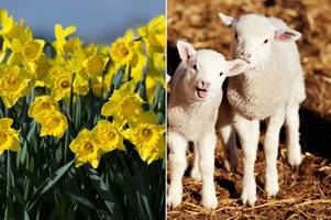 vernal equinox 2016: 5 weird traditions to celebrate the first day of spring