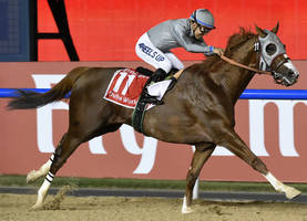 california chrome is back: near-disaster with saddle only highlights his dubai brilliance