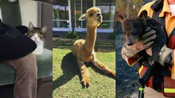 Top 3 Weird (Yet Adorable) Animal Stories Of The Week
