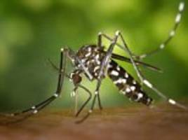 Zika could spread to Europe: Summer will bring more virus-carrying mosquitoes, global health officials warn