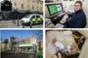 Most shared stories - leisure centre facelift, cats and dogs home...