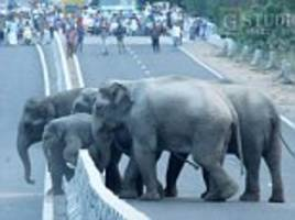 cute photos shows indian elephants push baby over motorway