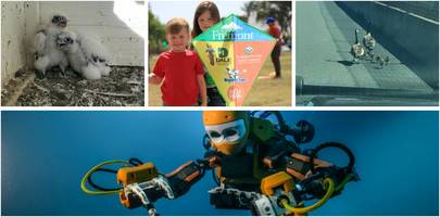 robotic diver; free college tuition; goose family rescued; special olympics: saturday smiles
