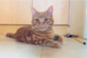 devastated hayle couple still searching for missing feline friend