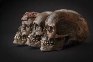 Ancient DNA Sequencing Reveals Secrets Of Ice Age European Population