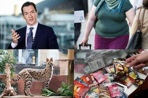 Morning news headlines: George Osborne warns of 'DIY recession' if United Kingdom votes for Brexit; Eating full fat foods 'can lower chance of obesity'