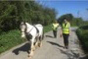 Meet Nancy the rescue pony who is set for a new life at a...