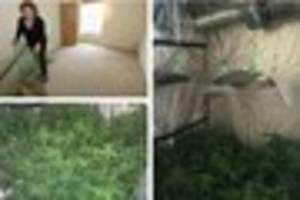 'cannabis farm' causes thousands of pounds of damage to...
