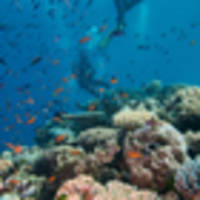 35 per cent coral death in parts of Great Barrier Reef