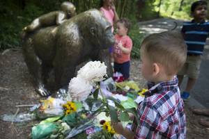 family: boy who fell into gorilla enclosure doing 'just fine'