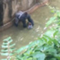 mother of boy who fell into gorilla enclosure lashes out at critics