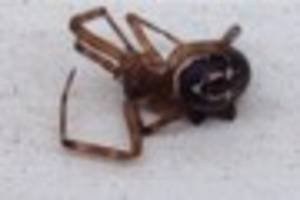 Essex has 'thousands' of venomous false widow spiders on loose