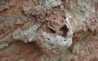 Farmers, 25 Million Years Ago, Were Termites, Not Humans