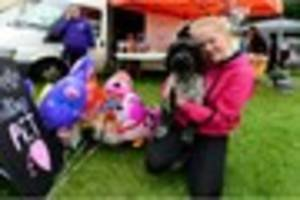 video: the sentinel's popular pet idol competition sees dogs...