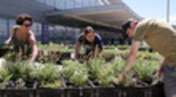 video: did you know there's a little vegetable farm at jfk airport?