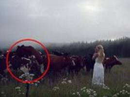 Swedish blogger Jonna Jinton summons herd of cows using ancient call – but witnesses a lot more than she planned