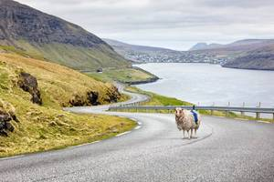 the faroe islands want to change 360-degree sheep view for google street view
