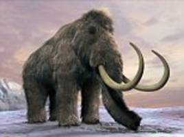 could buttercup the zombie mammoth save the world? experts claim resurrecting animals could protect permafrost