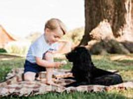 Kate and William accused of 'irresponsible animal cruelty' over picture of Prince George 'feeding a chocolate ICE CREAM' to Lupo despite dogs being allergic to dairy