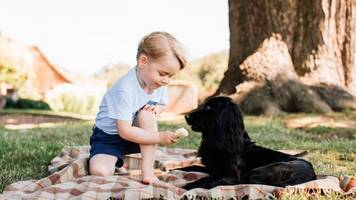 Prince George's third birthday marked with release of photos