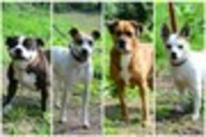 Give a Pet A Home: Can you help rehome these dogs from Animal...