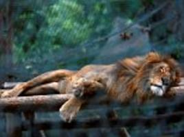 FIFTY animals starved to death in Venezuelan zoo: Beasts left to die because economic crisis meant keepers could not afford to feed them