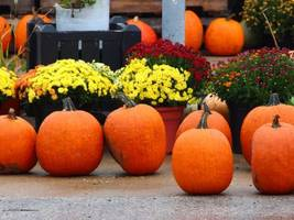 guilford's annual agricultural fair returning in september