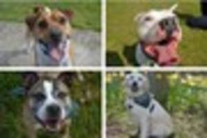 Five dogs that need a new home in North Lincolnshire