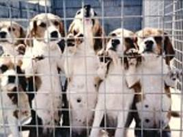 fury after scientists blinded and killed six dogs to carry out a study on their eyes which didn't manage to prove anything