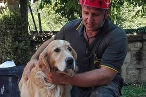 barking dog found alive in rubble nine days after italy earthquake