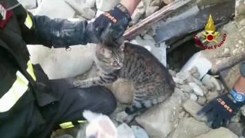 cat rescued from rubble 16 days after italy quake