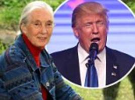 Jane Goodall says Donald Trump's behavior is similar to chimpanzee 'dominance rituals'