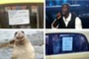 Car up 'for seal' in Bristol for past month attracts attention -...