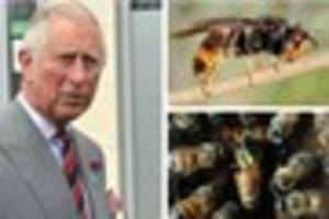 exterminate: government hit-squads target bee-killing asian...