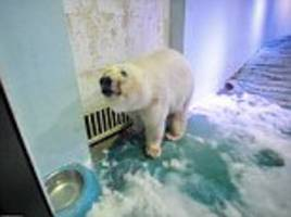 Chinese mall housing the 'world's saddest polar bear' plans to host more animals