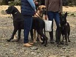 Dog owners are shamed on Facebook after their Great Dane appeared to leave 'enormous' mess on a beach