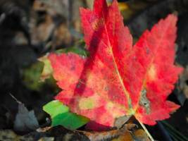 Chance of Thunderstorms in Wilton: Weekend Fall-Like Weather Forecast