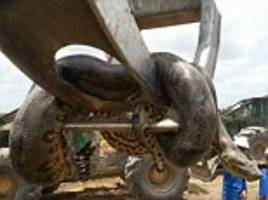 Construction workers discover 10m anaconda on a Brazilian building site
