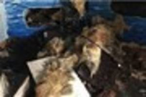 animals killed in horror blaze at seal sanctuary