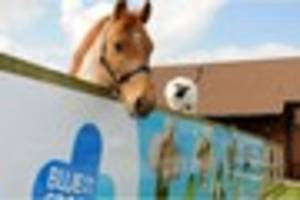 Give your first  new fiver to help ponies in need at Blue Cross...