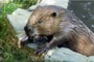 Hundreds of animals could be put down as Beaver Water World...