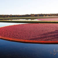 Ocean Spray Announces Start of the North American Cranberry Harvest