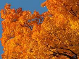 Ohio's Best Fall Foliage Dates: Interactive Map